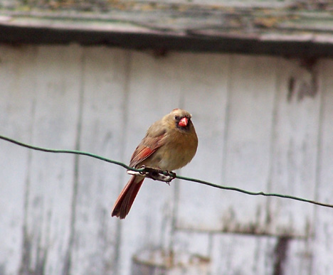 Bird on a Wire 1