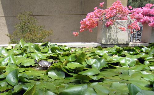 Ecstatic turtle near pink tree