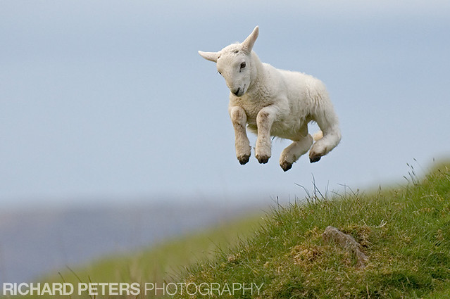 Watch The Lamb, Spring Lamb - 2007 BBC Countryfile competition winner.