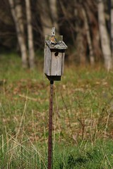 Female Bluebird on Box - actually last year's picture... but the bluebirds are using the same box this year!
