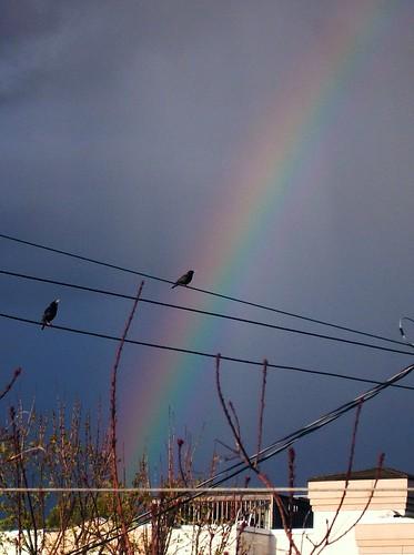 rainbow and birds 2