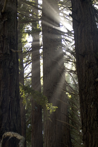 Light in Trees, by CarbonNYC @ Flickr