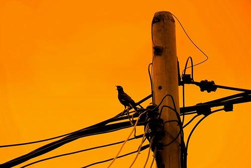 flickr.com/bizzzarro