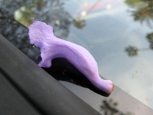 On the windshield