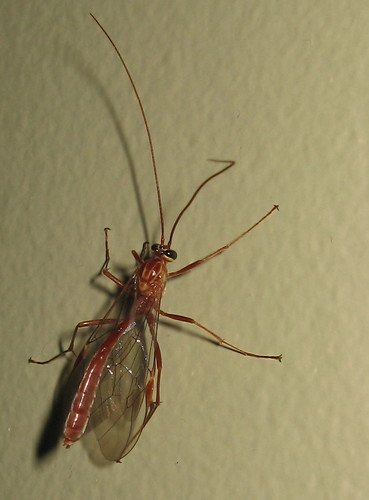 Insect_in_my_house_crop