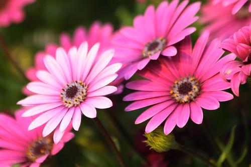 más flores de mi jardín