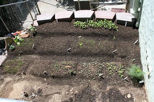 garden in a heat wave