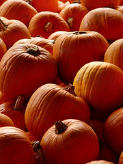 Pumpkins by Tambako the Jaguar, on Flickr