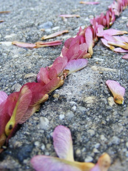 crack seeds
