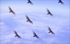 Vultures in Space
