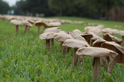 Field of Spores