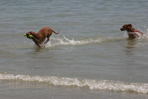 East Beach Cafe Littlehampton Dogs