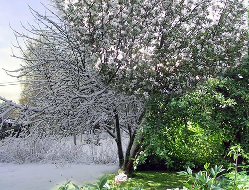 A season tree