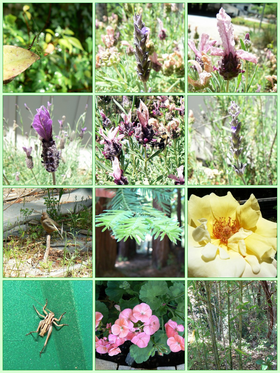 My Garden May 25, 2007