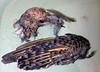 Dead Bird CSI - Flicker