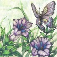 簽字筆點畫_蝴蝶與龍膽花
