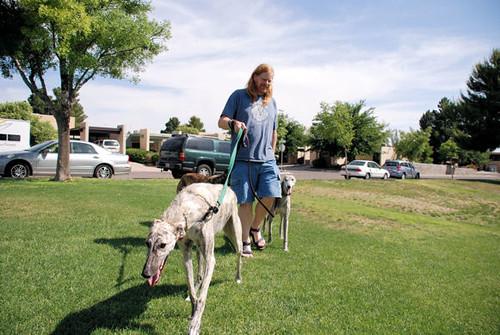 Nikriss and Greyhound Escorts