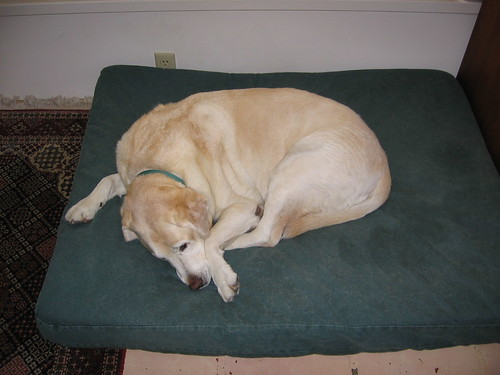 Lexie on her bed