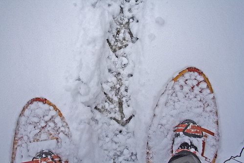 Turkey Prints and Snowshoes