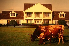 "South Fork Ranch - The Soap Opera ""DALLAS..."