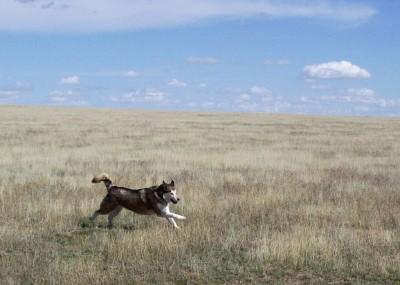 Kish running