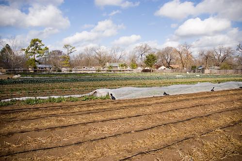 Boggy Creek Farm (by bookgrl)