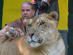 Man and Liger by andycarvin