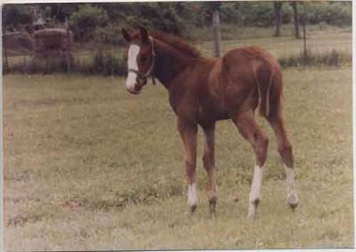 Alibhai's Alibar- foaled 3/28/1979