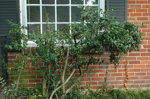 Ugly Bush