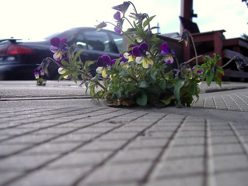 Flowers in the deck