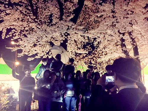 벚꽃놀이_7