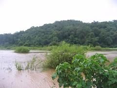 Kollibacchalu Dam -Malenadu Heavy Rain Effects Photography By Chinmaya M.Rao   (107)