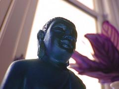 Buddha mind window