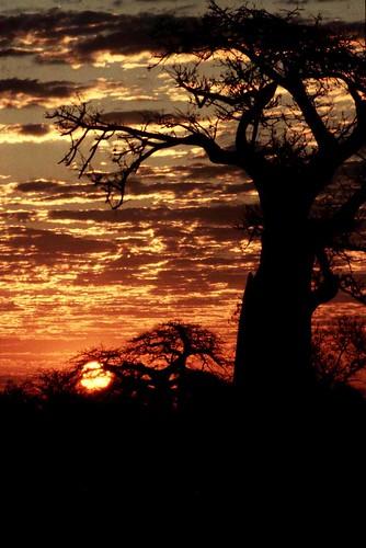 Zimbabwe 1, by babasteve @ Flickr