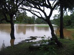 Kollibacchalu Dam -Malenadu Heavy Rain Effects Photography By Chinmaya M.Rao   (128)