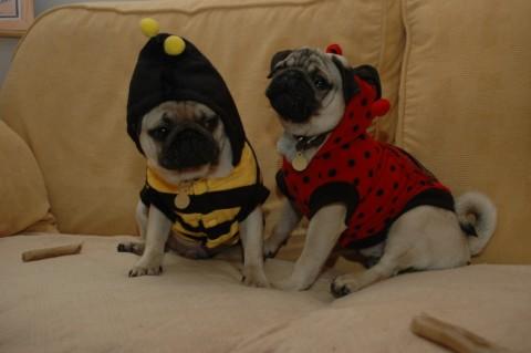 Mickey & Arthur dressed up