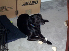 Julia and her bone