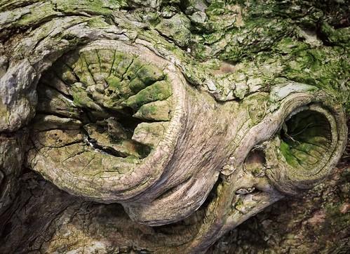 wood moss stump tree hole circle abstract wabi sabi wabisabi nature green huawei leica p9 mobile phone