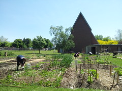 """Calvin Park Community Garden 2 • <a style=""""font-size:0.8em;"""" href=""""http://www.flickr.com/photos/61175668@N08/18910076545/"""" target=""""_blank"""">View on Flickr</a>"""
