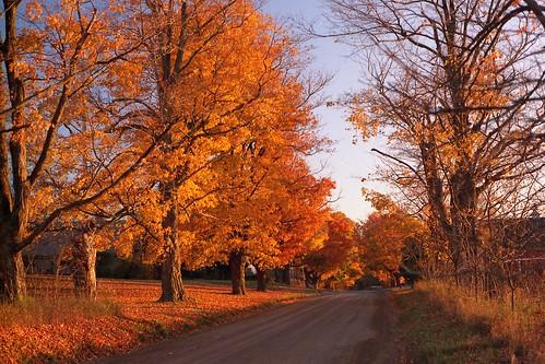 Michigan fall.