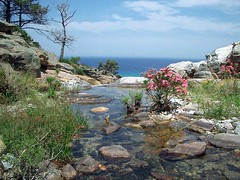 Ikaria 031 (isl_gr (away on an odyssey)) Tags: pond hiking beautyconcealed ikaria icaria  trails july canyon greece blogged oleander  hikingikaria  waterdreams katarraktis  caria oliander  egean myrsonas  calendar2008 impressedbeauty ysplix ypslix