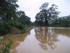 Kollibacchalu Dam -Malenadu Heavy Rain Effects Photography By Chinmaya M.Rao   (125)