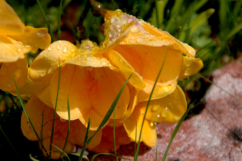 Water Drops 2 von JSM Photography.