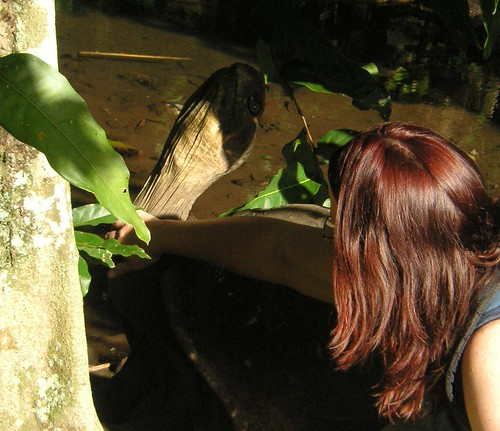 Petting the tortoise