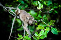 monkeys-1021