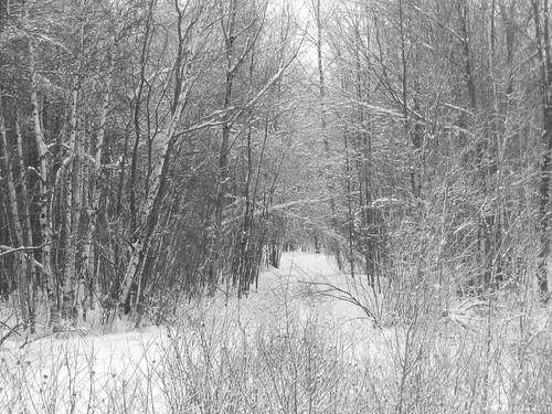 Ma forêt sous la neige...
