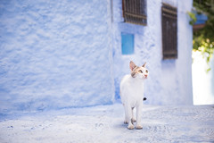 cats are everywhere in Morocco