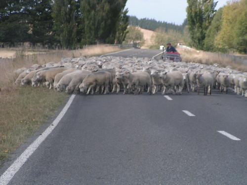 new zealand traffic jam 1