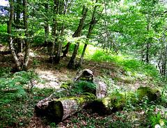 Bosque de Peloño 2