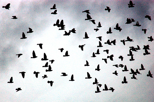 Flock of Birds by Picture Perfect Rose on Flickr.